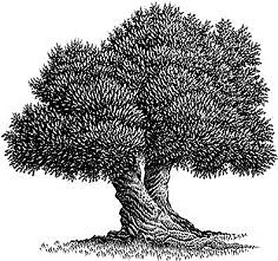 Biolea Tree Image